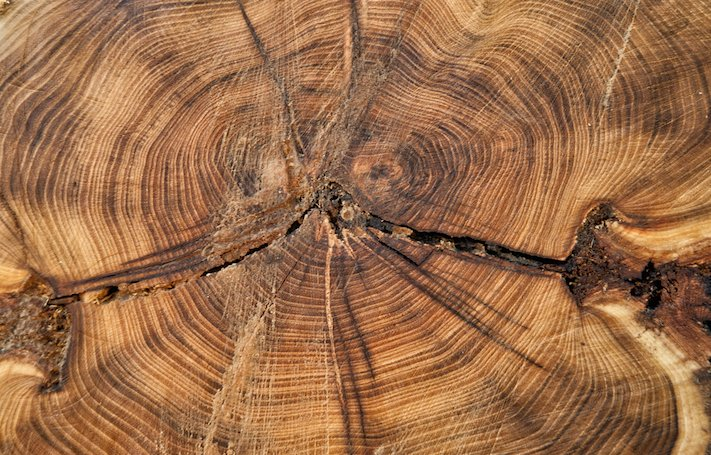 The rings on a tree trunk show a lifetime of growth. When implemented correctly, the ROI of thought leadership can also last a lifetime.